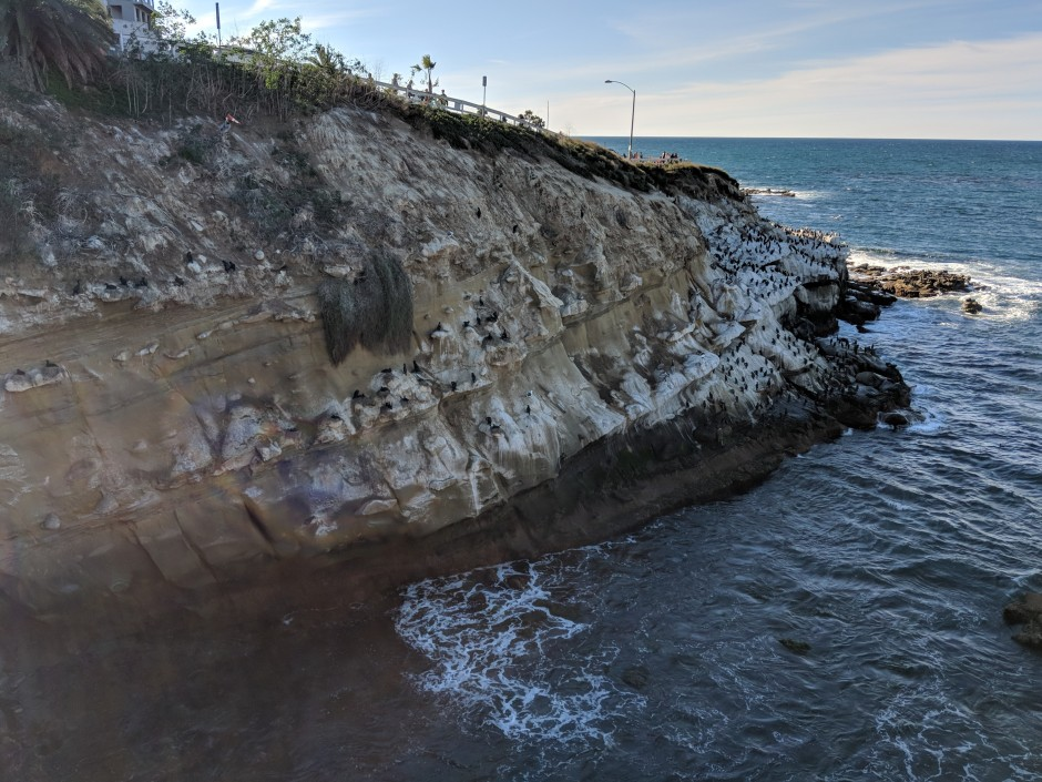 Gulls perched on the rocks of the popular La Jolla Caves and Coves.